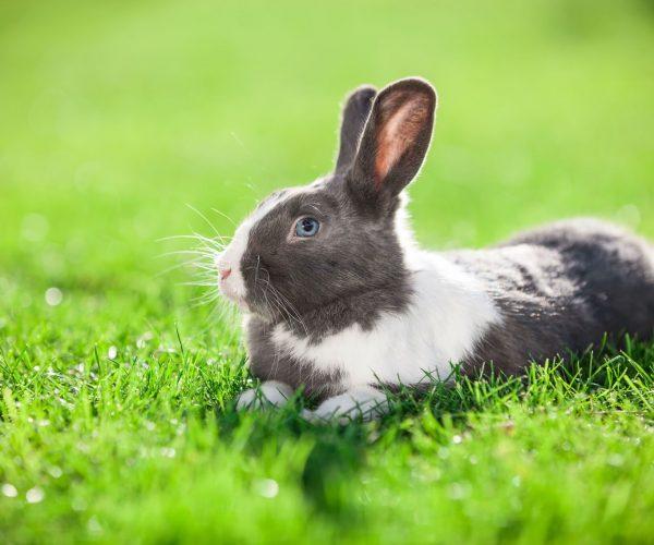 pet-rabbit-on-green-grass-P5EQ5GR